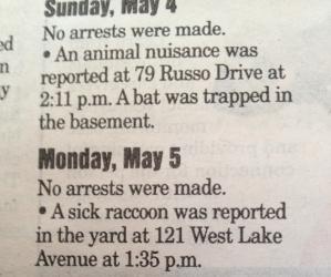 bat and raccoon