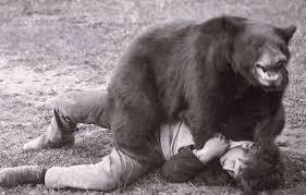 Bear Mauling