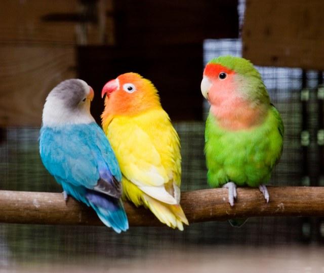 Jealous Birds