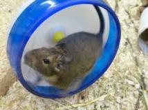 Hamster wheel 2